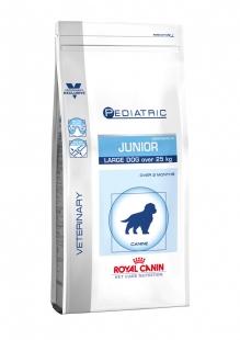 JUNIOR LARGE DOG