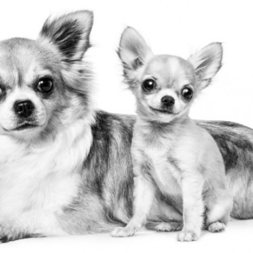 Descubre cómo controlar las sensibilidades de tu mascota a través de la nutrición