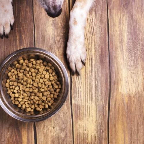 Preguntamos al veterinario: ¿mi mascota necesita una dieta terapéutica (y por qué cuestan tanto)?
